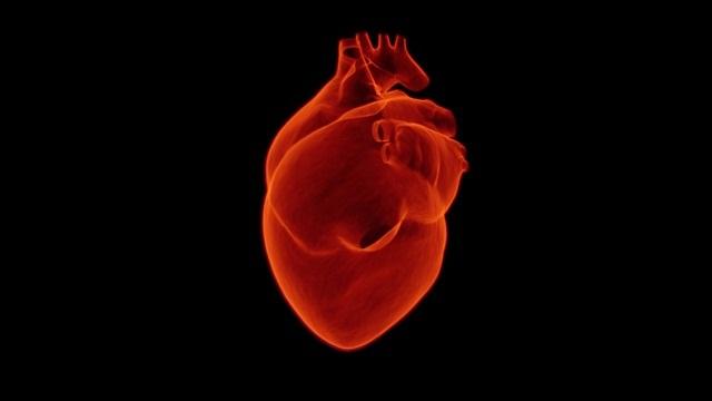 Enfermedades del corazón y obesidad