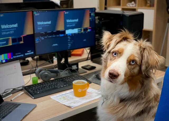 mascotas en el trabajo